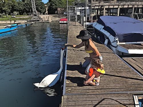 Mamma e bimba nutrono tutti i cigni del Lago Maggiore ed Angera.